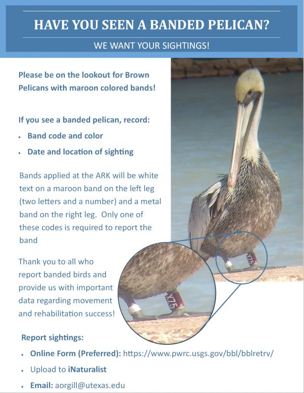 pelican bands