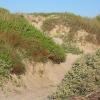 Mustang Island Beach Exploration Program - January 30th 10-11am